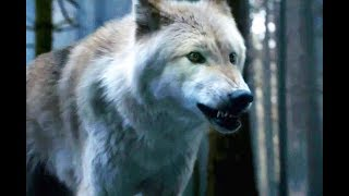 Peter Dinklage: Stop Trying To Buy Dire Wolves!