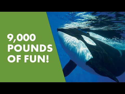 Meet Kyuquot   SeaWorld®