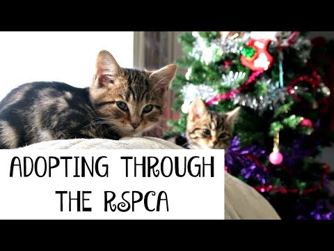 WHAT'S IT REALLY LIKE TO ADOPT KITTENS THROUGH THE RSPCA   Part 1