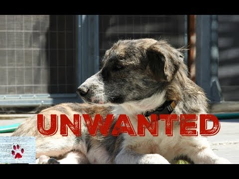 Unwanted dog - 3 years and 3 lives without a home
