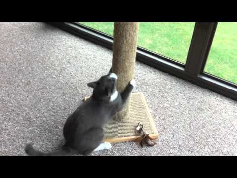 Max with scratching post