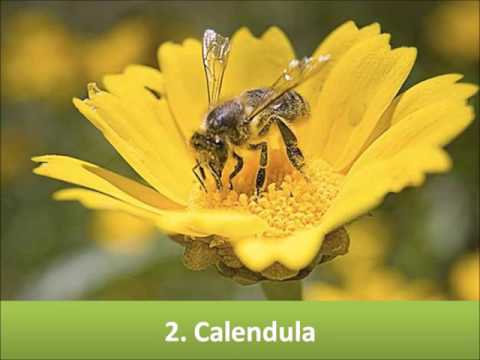 Top 10 Flowers attract the Bees!