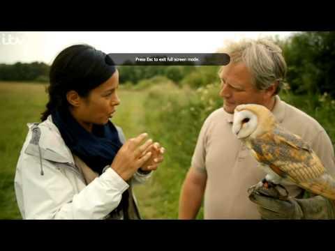 Barn Owl Boxes