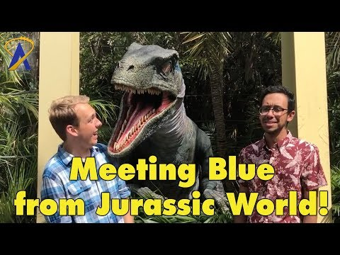 Meet Blue the Raptor Dinosaur from Jurassic World at Universal Orlando