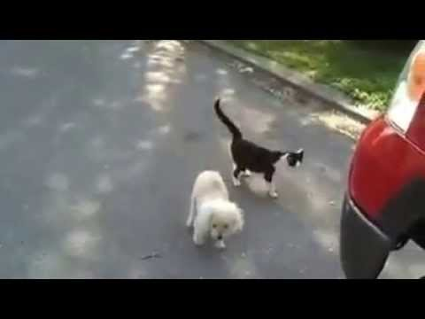 Cat helps blind Dog to see where he's going smile