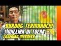 Download  BURUNG TERMAHAL : PENAWARAN 1 MILIAR TAK MEMBUAT LOVEBIRD MERDEKA DI JUAL MP3,3GP,MP4