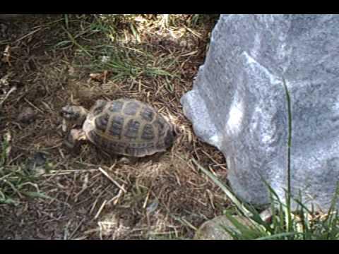 My Turtle Yard - Outdoor Box Turtle Enclosure