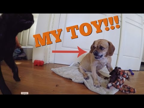 DOGGY CHEW TOY CHALLENGE!!!