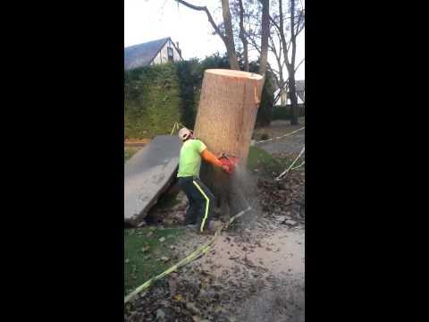 Cutting down tree stump