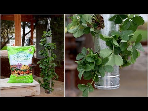 Build Your Own Vertical Strawberry Planter - Full Version