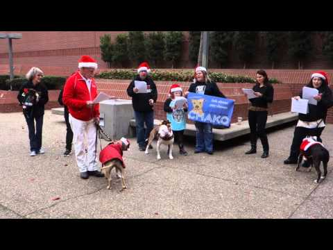 Pit Bull Protest at the Sacramento Bee