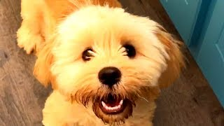 The Best Cute and Funny Dog Videos of the Week! 🐶