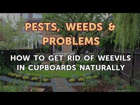How to Get Rid of Weevils in Cupboards Naturally
