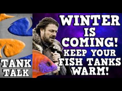 Keeping Your Fish Tank Warm In  The Winter! Tank Talk Presented By KGTropicals!!