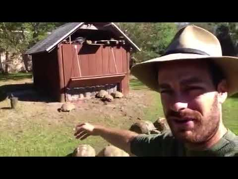 Feeding the Sulcata Tortoises at Kamp Kenan