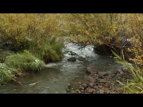 Beavers in Utah