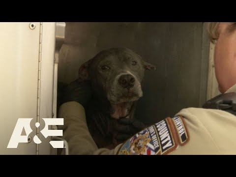 Live PD: Lucky Dogs (Season 2) | A&E