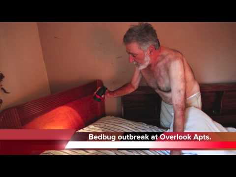 Bedbugs at Overlook Apartments in Chattanooga