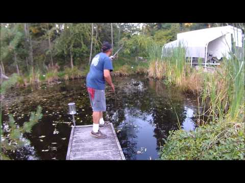 Frog Fishing (for BULLFROGS!!!) with Mann's The weasel #2