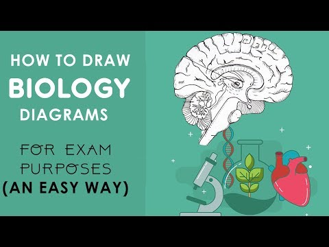 HOW TO DRAW BIOLOGY DIAGRAMS in an EASY WAY - Class 10 to class 12.