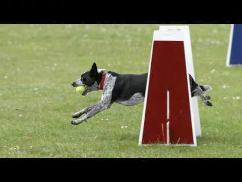 Dog Training - Do You Know Why Your Dog Doesn't Listen To You?