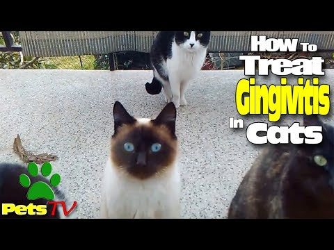 HOW TO TREAT GINGIVITIS IN CATS