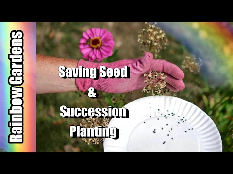 Succession Planting, Seed Saving, & Economics?? - How I Do It | THE GARDEN