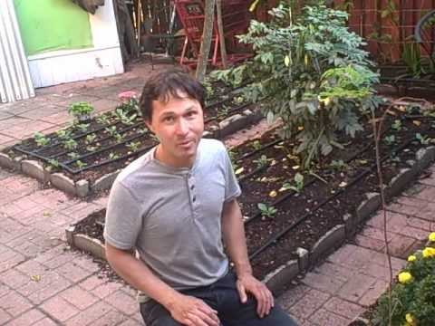 South Florida Fruit & Vegetable Raised Bed Garden Grows Fresh Food