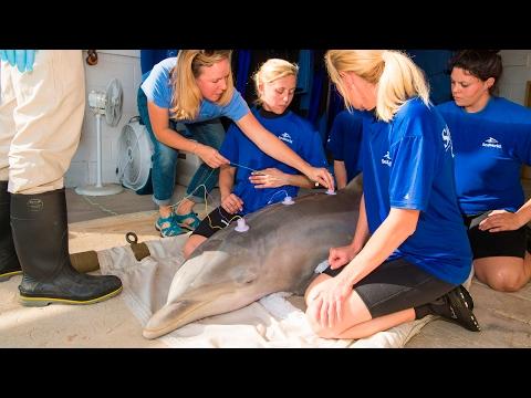 SeaWorld Orlando Facilitates Hearing Test for Rescued Dolphin   SeaWorld®