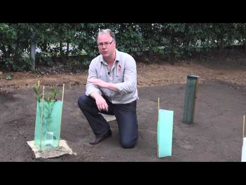 How to install Tree Guards by All Stake Supply
