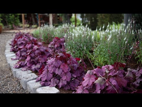 Planting a New Flowerbed // Garden Answer