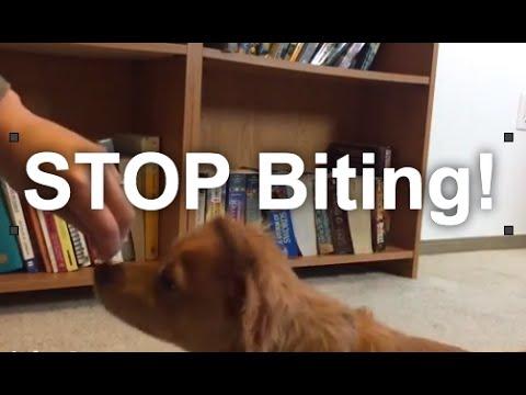 Dog Training Life Hack: Biting Hands, Self Control, etc. | Grisha Stewart