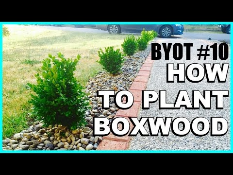BYOT #10 - DIY: Boxwood Appeal