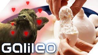 Bester Mozzarella von den glücklichsten Büffeln! | Galileo | ProSieben