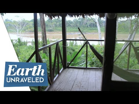 🌳 Jungle Lodge Room Review in the Amazon Rainforest - Wasai Amazon Lodges, Peru 🇵🇪