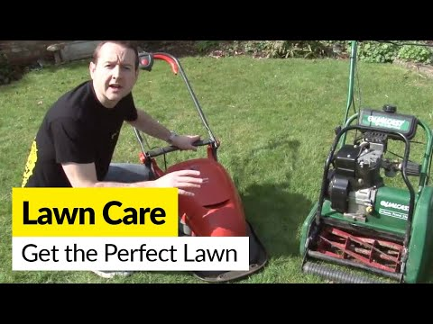 Lawn Care: How to Get the Perfect Lawn