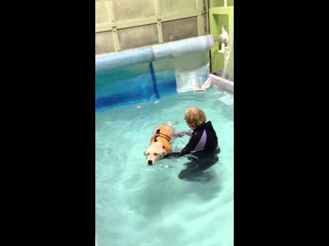 Dog Facts for Kids: Not All Dogs Know How to Swim!