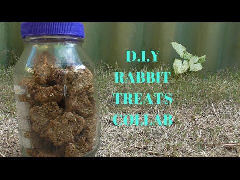 DIY Rabbit Treats(Collab)