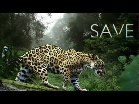 See Animals, Save Wildlife. At Seattle's Woodland Park Zoo
