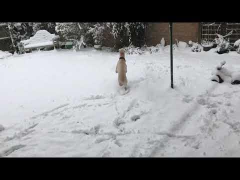 Skippy Tri-Paw Dogs First Deep Snow