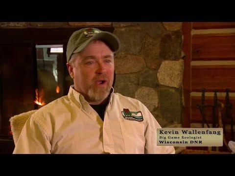 Wisconsin DNR wildlife veterinarians talk about the Elk program