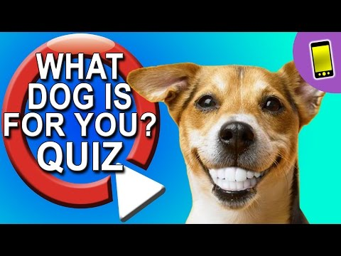 What Dog Should I Get? Take A Quiz
