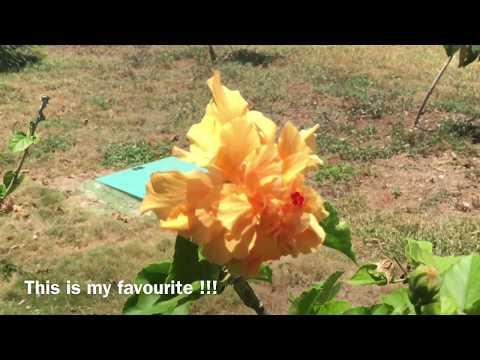 Valentin Perla Blanca • Walk through Gardens • Cayo Santa Maria • Cuba 🇨🇦 🇨🇺