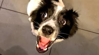 Cute and Funny Puppies! Puppy Videos to Make Your Day 🐶