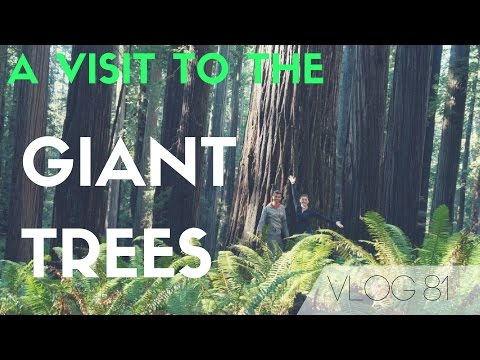 Redwoods National Park Adventure - Visiting some of the largest trees on earth! | MOTM VLOG 81