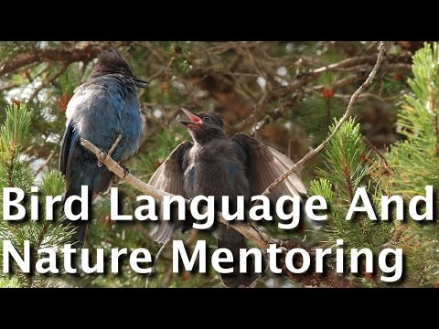 Bird Language And Nature Mentoring: Connecting Deeply With The Language Of Birds