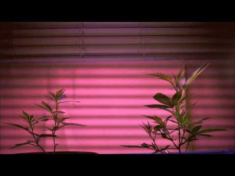 Watch this crazy time lapse video of a plant grown utilizing Air Injection Technology.
