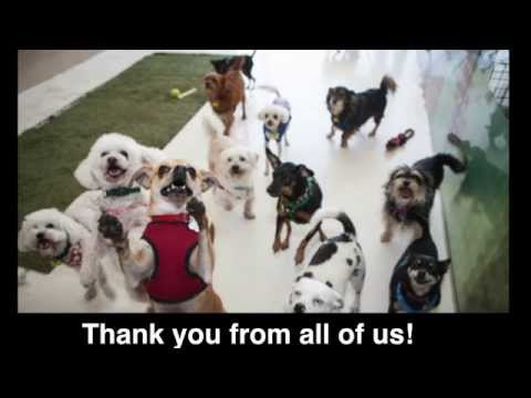 Wonderful Dogs are Being Saved Thanks to You...