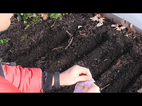 5 Cold Hardy Greens Everyone Should Be Growing & How to Grow Them
