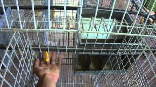 Cages Pour Lapins Et Volailles